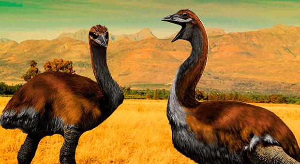 dünyanın en büyük kuşu
