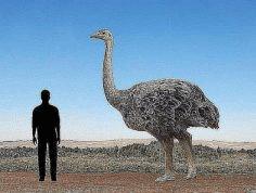 kuş familyasının en büyük canlısı