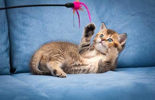 Kediler İçin Evde Yapılabilecek Aktiviteler