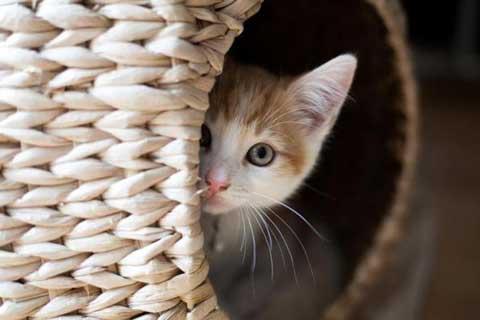 Kedilerin Eve Alışma Süresi