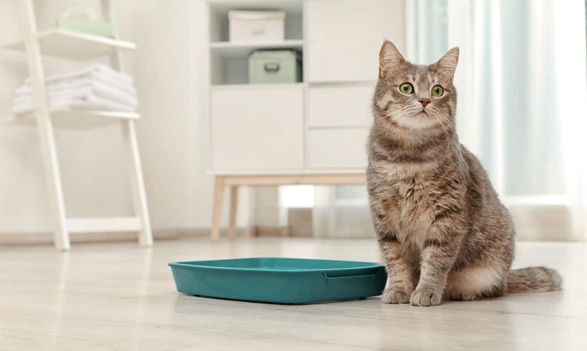 Kedi Kumu Satın Alırken Nelere Dikkat Etmek Gerekir?